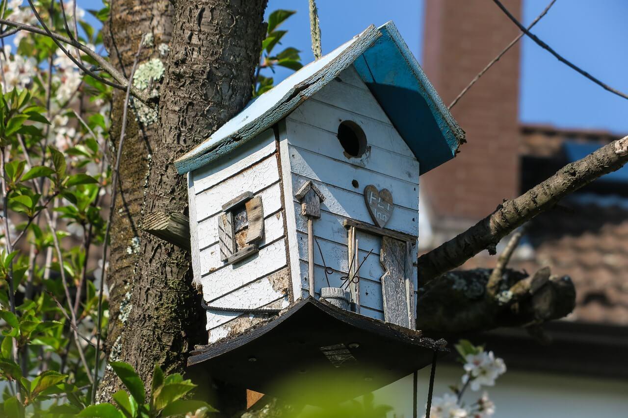 bird-feeder-5026222_1280